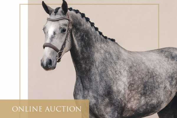 Record-breaking bidding on the third evening of Callaho's inaugural Online Auction