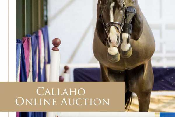 The Callaho Online Auction – a triumphant success